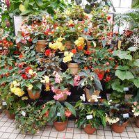 2017年京都 4月5日 その3 京都府立植物園 前編 観覧温室