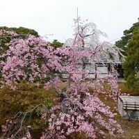 2017年京都 4月5日 その7 京都御所見学と桜
