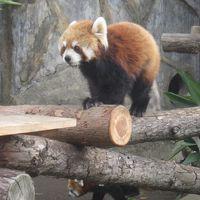 横浜に行ってきました! 野毛山動物園 原鉄道模型博物館 みうら湯