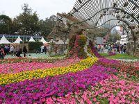 香港★2018香港花卉展覧 Hong Kong Flower Show @ 維多利亞公園