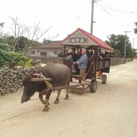 沖縄八重山旅 (3) 竹富島で古き良き沖縄を感じる旅