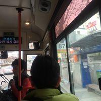 やっぱりイヌを見る旅です。釜山2日目