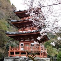 2017年京都 4月6日 その6 京都定期観光バスで三室戸寺に行きました。桜は少し咲いていました。