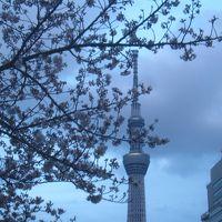 東京ソラマチから隅田公園の桜