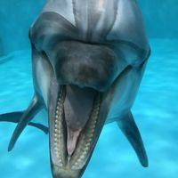 どこかにマイルで青森・浅虫温泉へ〜ホタテ料理を満喫し、浅虫水族館でイルカに癒される〜