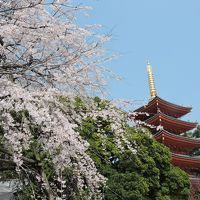 博多旧市街と桜並木をめぐるウォーク