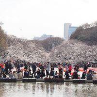 パンダもビックリ!? 上野公園と東博のお花見
