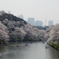 桜満開の東京散歩 千鳥ヶ淵、靖国神社、飛鳥山公園