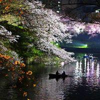 美しき光と闇【お江戸 サクラ漫ろ歩き-1】