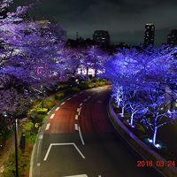 【東京散策78-4】 TOKYO MIDTOWN BLOSSOM