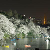 環境や桜にも優しい!千鳥ヶ淵の夜桜ライトアップ