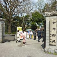 2018年 お花見 その(3) 東京・新宿御苑