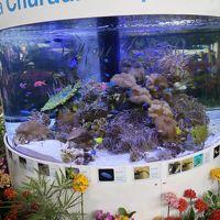 世界らん展-4 「楽園・南国・熱帯」テーマに ☆沖縄美ら海水族館の水槽展示も