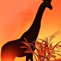 世界らん展-5 《ふしぎなアフリカの蘭たち》特別展示 ☆光と闇の演出効果も