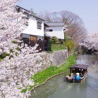 滋賀県民になって2年半経ってもまだまだ旅行気分の、2週末連続で滋賀散策 - 2018年春 編