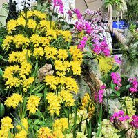 世界らん展-10 〔蘭の花園〕総合ディスプレイ奨励賞など ☆生産者の技と情熱を集めて