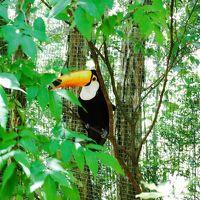 地球の裏側ブラジルへ 〜イグアス国立公園 2〜