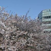 【2018横浜みなとみらい】桜の名所でランチを食べて徒歩散歩。開花状況はバッチリ!赤レンガ倉庫では「ぐでたま」イベント!