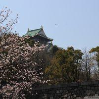 大阪城 癒しの桜とアフタヌーンティー