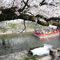 松川公園の桜と富山城