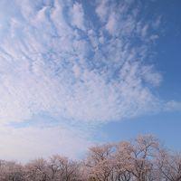 のったりおりたりマイプラン(指宿・知覧) 二日乗車券大人 2,200円 で桜めぐり&お〜〜〜っとでアートな川辺温泉