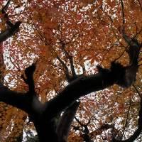 *.:・.。ドライブ旅行1 2/4 〜ウェスティン都京都・京都御所・ウェスティン淡路〜*.:・.。