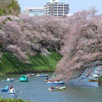 桜が散る前に弾丸日帰り花見ツアーin東京 Part6は東京の桜花見名所と言えば千鳥ヶ淵!! O(*^-^*)O
