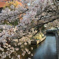 春の京都 2018 � 鴨川-京都御苑散策