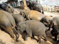 光り輝く島スリランカ#3−2017年6月19日  ゾウの孤児院・キャンディへ