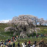 [2018年4月] 桜紀行  三春滝桜 福島県田村郡三春町