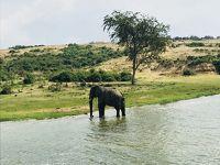 野生のゴリラに会いに行ってきた!�クイーンエリザベス国立公園編