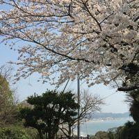 春の鎌倉・江の島一人旅�