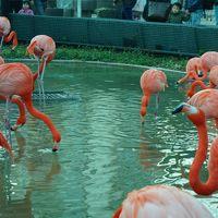 *:.,.:散歩日記 〜上野動物園〜*:.,.: