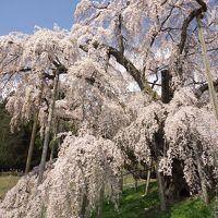 三春滝桜と花見山