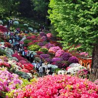 根津神社 / つつじ祭り