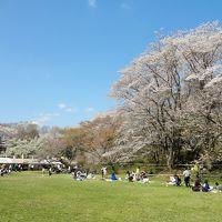 日本100名城_佐倉城址公園さくらまつり