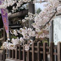 山形の桜を楽しむ1日(米沢の上杉神社、山形の霞城公園)、春がすみの中、桜を愛でる。