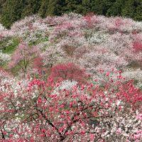 日本一の花桃の里 阿智村 2018