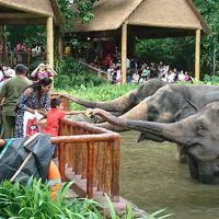 動物園とUSSだけのシンガポール旅 その1はシンガポール動物園