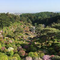 新東京百景・花と歴史の寺・塩船観音寺のつつじまつりに行ってきました!