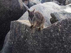 オーストラリア周遊 2017秋  �グレートバリアリーフ、野生動物探索ツアー