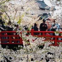 青森/春の東北花紀行_vol.1世界よ、満開が過ぎてもこれが弘前の桜だ@ドーミーイン弘前(2018年4月)