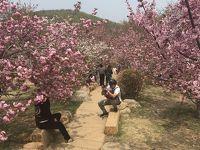 3年振りの大連3泊4日旅行【2】龍王唐績桜花園、ベニス、黒石礁 東来順、大連港、等