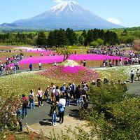 富士山とピンクの絨毯芝桜まつり