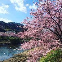 一足早く桜を観に河津から伊豆高原へドライブ。