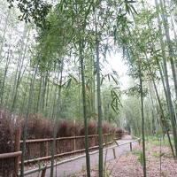 *18'5月GW。新緑が美しい♪王道ルートで周る一歳児連れ京都旅行記�。。。一日目の日中は、インスタ名物キモノフォレスト&憧れの竹林へ♪嵐山編