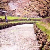 春の川越 〜桜と花筏と小江戸の風景〜