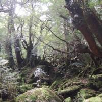 2018春 屋久島でひたすら歩く!�白谷雲水峡で癒やされる