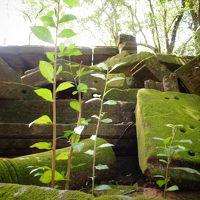 GWカンボジア一人旅:ラピュタのモデル、ベンメリア遺跡へ