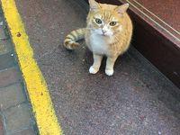 GW2018香港 猫を求めてさまよう西環パトロール隊�